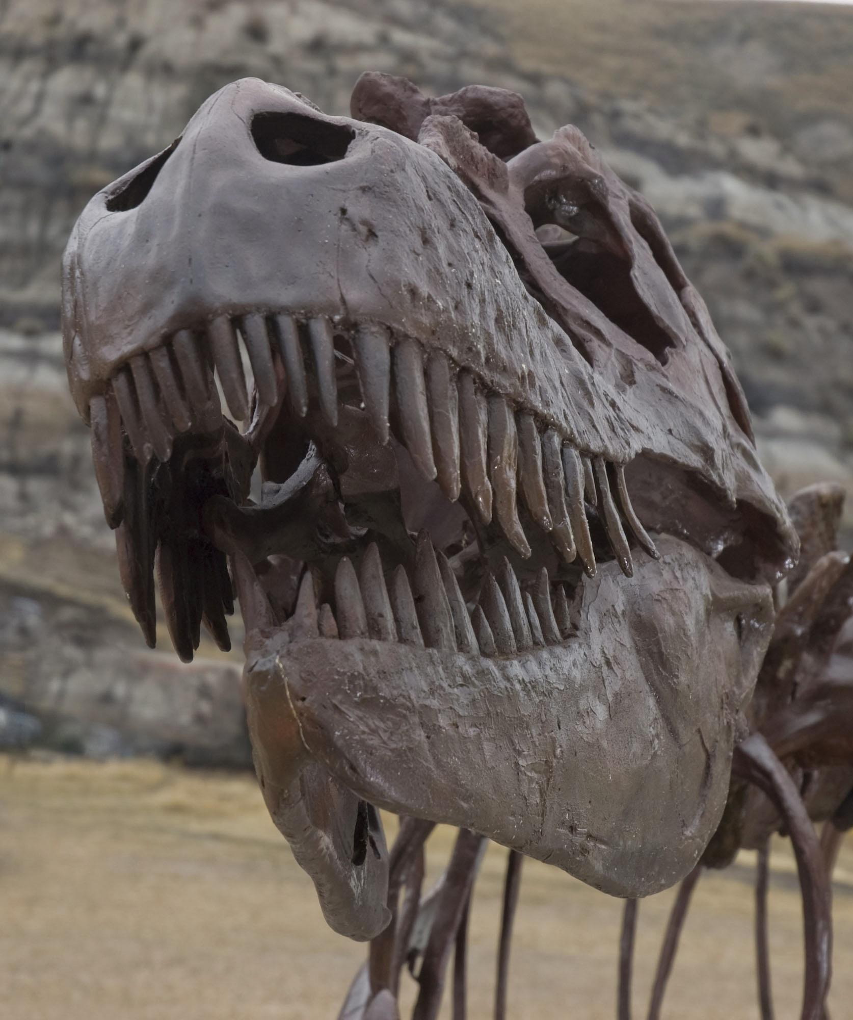 Top exposition dinosaures jardin des - Exposition dinosaures jardin des plantes ...