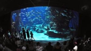 Top-parents.fr : Aquarium Mare Nostrum - Montpellier Parcs ...