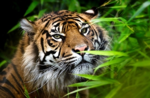 Chester_Zoo_001