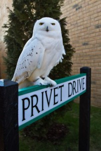 Animal_Actors_-_an_owl_that_played_Hedwig_poses_outside_Privet_Drive