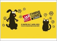 chiensetchats
