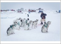 The-fine-choreography-between-dogs-and-musher-when-dogsledding-in-Greenland-1-min